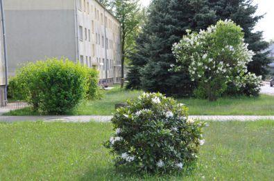 Wohnung in Hosena
