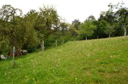 Wohngrundstück in Rüdenau