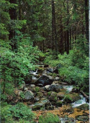 Freizeitgrundstück in Thale  - Friedrichsbrunn