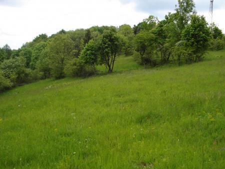 �ber 3 Hektar gro�e Weidefl�chen Krautberg verpachten - Grundst�ck mieten - Bild 1