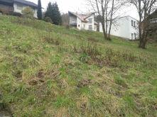 Wohngrundstück in Eschau  - Eschau