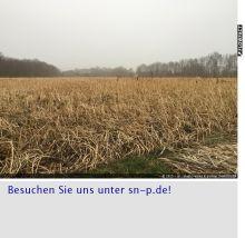 Wohngrundstück in Delbrück  - Westenholz