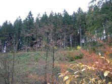 Wohngrundstück in Werdohl  - Eveking