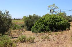 Land- und Forstwirtschaft in Lagoa