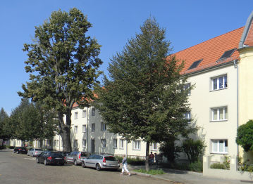 Wohnung in 							Magdeburg 							 - Stadtfeld Ost