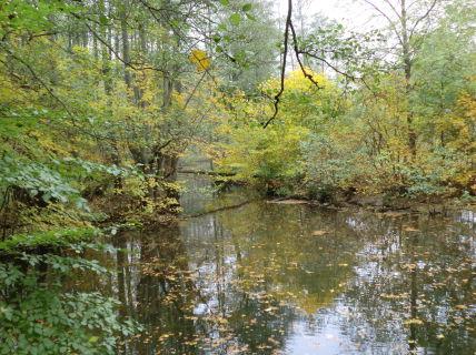 Wassergrundstück (Wildnisbiotop mit altem Baumbestand) als...