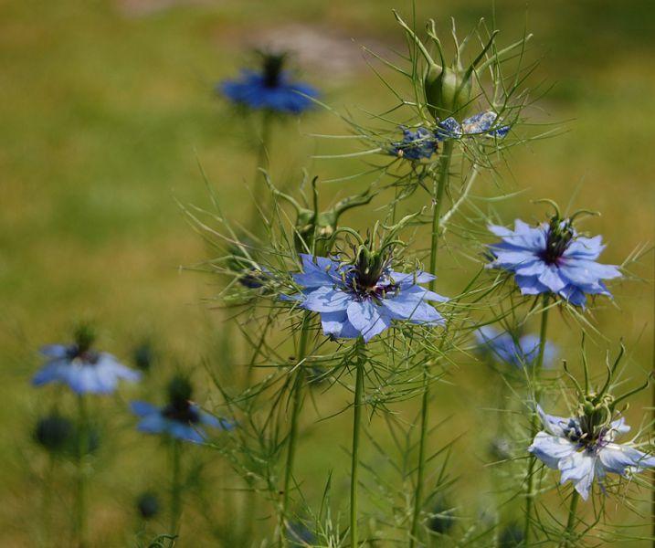 Es gr�nt g�n Fl�ha s Blumen bl�hen Freizeitgrundst�ck VERPACHTEN - Grundst�ck mieten - Bild 1