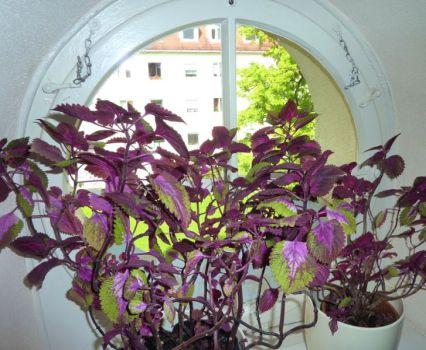 Kernsaniert!  Charmanter Dachgeschossflair - ruhig & grün