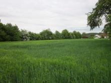 Wohngrundstück in Nidderau  - Heldenbergen