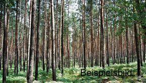 Jagd- und Forstwirtschaft in Bad Belzig  - Bad Belzig