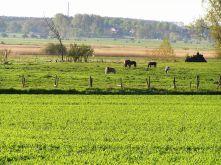 Wohngrundstück in Kuhs  - Zehlendorf