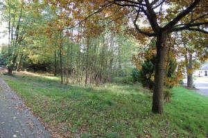 Wohngrundstück in Morbach  - Morbach