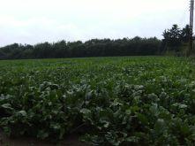 Land- und Forstwirtschaft in Goch  - Goch