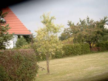 Wohngrundstück in Püchau  - Lübschütz