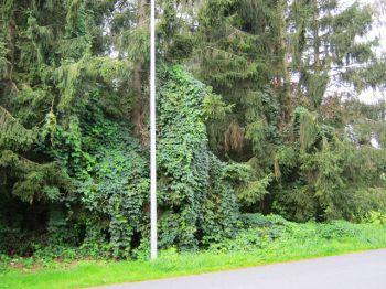 Wohngrundstück in Ritterhude  - Ritterhude