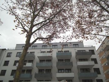 Erdgeschosswohnung in Mannheim  - Schwetzingerstadt