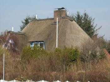 Reetdachhaus in Wobbenbüll