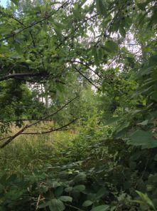 Wohngrundstück in Frankenberg  - Frankenberg