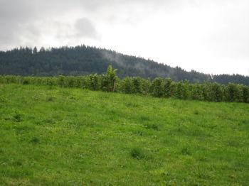 Etagenwohnung in Baden-Baden  - Neuweier