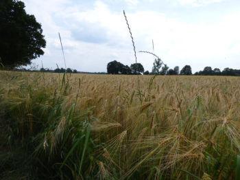 Land- und Forstwirtschaft in Velen  - Ramsdorf